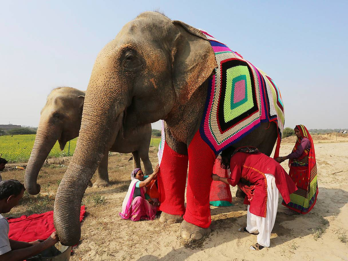 Read more about the article Warm Baby Elephants in South East Asia