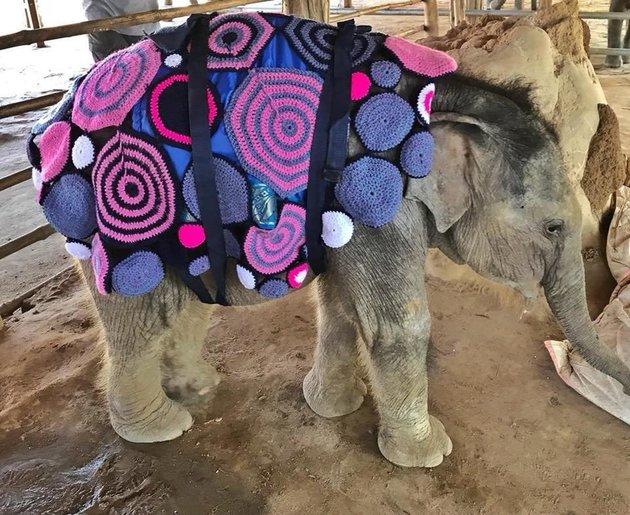 Baby Elephants in Crocheted Blankets!