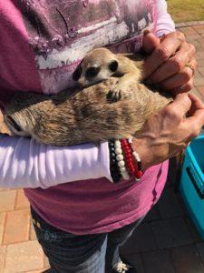 meerkat blanket